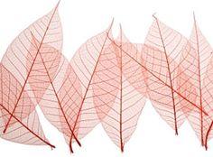 How to make leaf skeletons