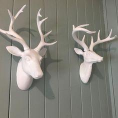 Deer antlers head / stag head mounted wall hanging - Six Things Stag Deer, Deer Antlers, White Deer Heads, Decorative Items, Garden Sculpture, Lady, Animals, Deer Horns, Animales