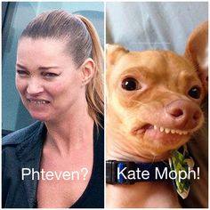 Saw this picture of Kate Moss when I was searching for something. Made me think of Phteven (Tuna). I love that dog, although I'm a cat person. Silly Jokes, Funny Dog Memes, Haha Funny, Funny Cute, Funny Dogs, Cute Dogs, Hilarious, Funny Stuff, Dog Funnies