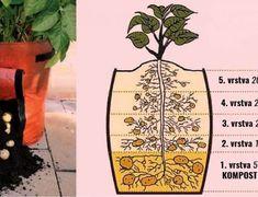 zemiaky-4-600x460 Boho, Fruit, Compost, Bohemian