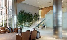 TK Architects - Boston Medical Center; a small indoor garden of bamboo adds that natural element to this large open and airy public space.