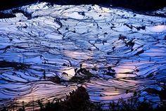 元陽の棚田(中国)