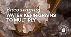 Trying to get your water kefir grains to grow? Learn tricks for helping your water kefir grains multiply including the importance of adequate minerals.