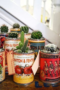 Cacti potted in visually interesting tin cans