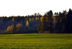 Марийские леса