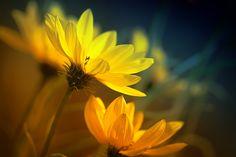 Noch eine kleine Herbstrunde « Gelbes