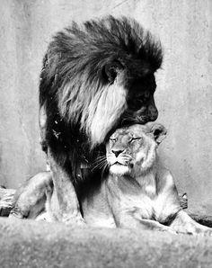 #leon