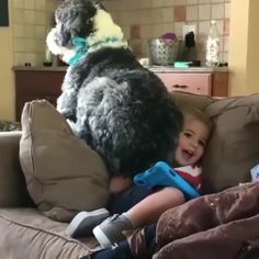 Funniest compilation of beautiful animals - Lustiges tier - Funny Animal Memes, Cute Funny Animals, Funny Animal Pictures, Cute Baby Animals, Funny Cute, Funny Dogs, Animals And Pets, Cute Dogs, Funny Images