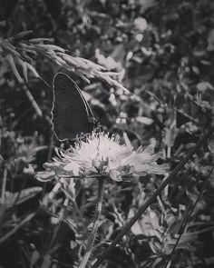 - one of my favorite motifs at the moment. Beauty First, Mother Earth, Butterflies, Nature Photography, In This Moment, My Favorite Things, Flowers, Plants, Pictures