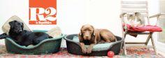 Informazione Contro!: Il Codice riconosce i diritti animali l'ultima riv...