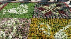 Tapete floral, Popo, Semana Santa