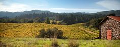 Jack London State Historic Park-- our ceremony and lunch will be held at the picnic area with this very view!