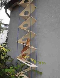 15 Beautifully Designed Cat Ladders & Stairs Around The World – Rachel Kirchner … – stan goodwin 709 – Cat playground outdoor Cat Stairs, Diy Cat Tree, Cat Run, Cat Towers, Cat Shelves, Cat Playground, Playground Design, Cat Condo, Outdoor Cats