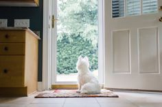 The Not-So-Secret Life of Pets: What Does Your Dog Do While You're Away? http://b.dogv.ac/29GbSW5