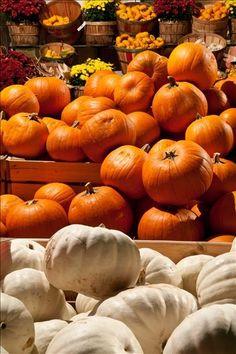 Orange & White Pumpkins at the Farmer's Market