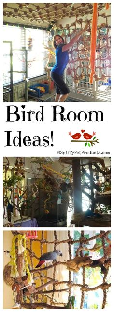 DIY pet bird room ideas you'll have fun making for your pet parrot, cockatiel, cocatoo, mackaw or other large bird. Heck even parakeets would love a bird playground like this! Busy birds are happy birds!