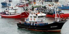 MadalBo: WWF: La pesca indiscriminada compromete el futuro ...
