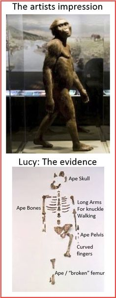 """Lucy is categorized by evolutionists as """"Australopithecus afarensis"""" which is an extinct African ape.  The animal was only 3' 7"""" tall so the artistic image also distorts the height of the bridge unless the rails are only about 18"""" tall.  Also this specimen is supposed to be over 3 million years old--who built the bridge?"""