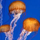 the most amazing place. i'm enthralled with the jellies.  www.montereybayaquarium.org