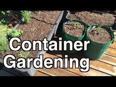 Gardening in containers is not only a great way to start gardening but allows you to grow in any small space! find out how easy it is to grow your own food on a deck, patio or balcony! Growing Plants, Growing Vegetables, Gardening For Beginners, Gardening Tips, Self Watering Containers, Growing Tomatoes In Containers, Organic Gardening, Vegetable Gardening, Hobby Farms