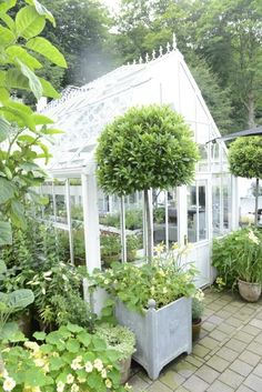 love this greenhouse so much!