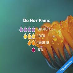 Do Not Panic - Essential Oil Diffuser Blend