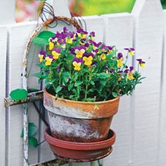 Fall Container Gardening Ideas: Heirloom Viola Container