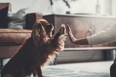 Denjo Dogs - Dogs Are Family. Dogs Trust, Dog Shop, Dog Love, Interior, Image, Indoor, Interiors