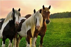 Dear friends I wanna recommend you a  noble equestrian lovers club named equestrianlover.com   The best, largest and most effective dating site for single horse lovers and friends in the world!it is an exclusive community for cowboys & cowgirls and equestrian singles to meet horseback riding enthusiasts, discover uncharted trails, pursue the country lifestyle, and locate the best riding areas.