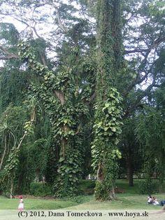 Lianas Botanical Gardens, Sri Lanka, Urban