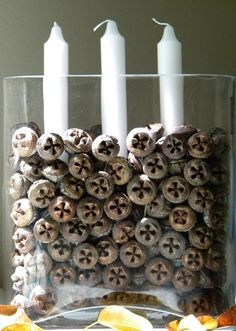 Use Eucalyptus pods as candle holder/ vase filler