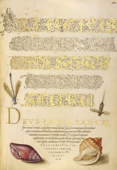 Damselfly, Insect, and Marine Mollusks; Joris Hoefnagel (Flemish / Hungarian, 1542 - 1600), and Georg Bocskay (Hungarian, died 1575); Vienna, Austria; 1561 - 1562; illumination added 1591 - 1596; Watercolors, gold and silver paint, and ink on parchment; Leaf: 16.6 x 12.4 cm (6 9/16 x 4 7/8 in.); Ms. 20, fol. 113. High res image from the Getty Museum.