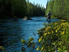 River Ukkohallanjoki, for fishing in rapids.