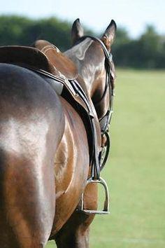 Horse & Saddle