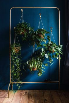 Collection of hanging plants on garment rack.