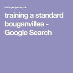 training a standard bouganvillea - Google Search