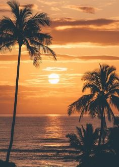 Palm trees sunset wallpapers beautiful sunset palm tree ree phone wallpapers unique sunrise in kauai of Beautiful Sunrise, Beautiful Beaches, Beach Pictures, Nature Pictures, Sunrise Pictures, Sunset Beach, Beach Sunset Wallpaper, Beach Sunsets, Miami Beach