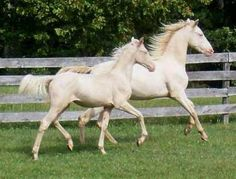 143 Best Horses Images Beautiful Horses Pretty Horses Beautiful
