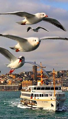 GALATA💜 Istanbul City, Istanbul Travel, Istanbul Turkey, Most Beautiful Cities, Beautiful Birds, Ankara, Hagia Sophia, Turkey Travel, Places Around The World