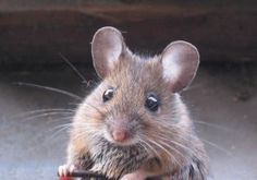 What Rampaging Mice can Do To Your Preps
