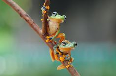 Frog, Two Frog, Flying Frog, - null
