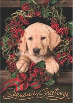 New for 2012. Puppy Wreath Flag designed by David and Joan Hagan for Flag Trends. The flag features an adorable lab puppy in a red berry wreath with a bow. It reads Seasons Greetings. The outdoor decorative flag measures 28 x 40 and is sleeved to go on a standard house pole. FlagTrends¨ Classic outdoor flags feature Dura Soft¨, an innovative fabric, designed specifically for decorative flags... Christmas Tree Bows, Christmas Puppy, Xmas Ornaments, Xmas Tree, All Things Christmas, Christmas Cards, Red Berry Wreath, Holiday Images, Flag Decor