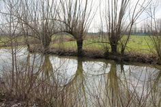 Trees reflecting in the pond / Alberi che riflettono nello stagno...