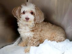 A1043564 Different Flags, Dead Dog, Homeless Dogs, The Lucky One, Dog Fighting, Bichon Frise, Old Dogs, Together We Can, Dog Love