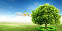 Dịch vụ tư vấn lập báo cáo giám sát môi trường