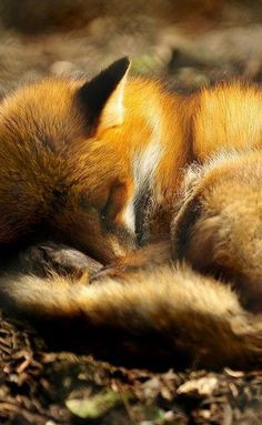 is there anything cuter than sleeping animals...