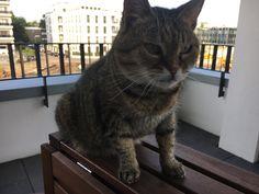 Szuszo Cat | Pawshake