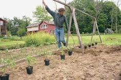 Commercial tomato growers use the string method to train their tomatoes. It takes less space is healthier for the tomato and easy for the home grower too.