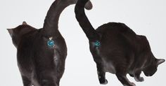 This Ass-cessory Turns Your Cat's Butt Into A Glittering Jewel   Bored Panda