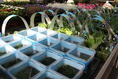 Waterplantjes